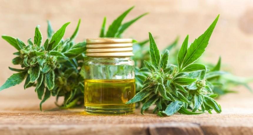 """Lorenzino: """"El Estado debe garantizar el derecho a la salud, porque quienes usan aceite de cannabis merecen una mejor calidad de vida"""""""