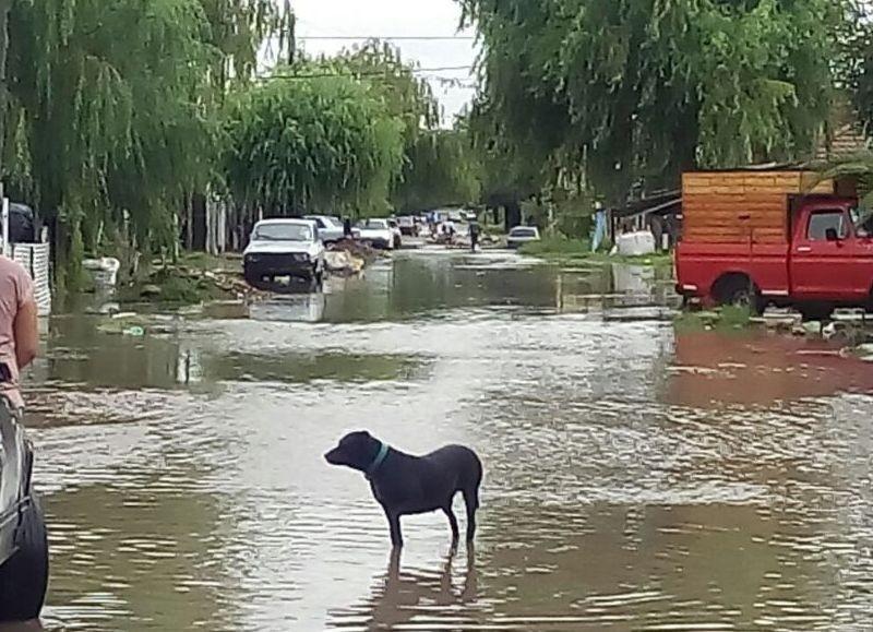 En Berisso la lluvia anegó las calles