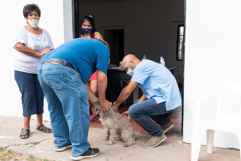 San Nicolás: El servicio de castración animal continuará en Barrio Golf