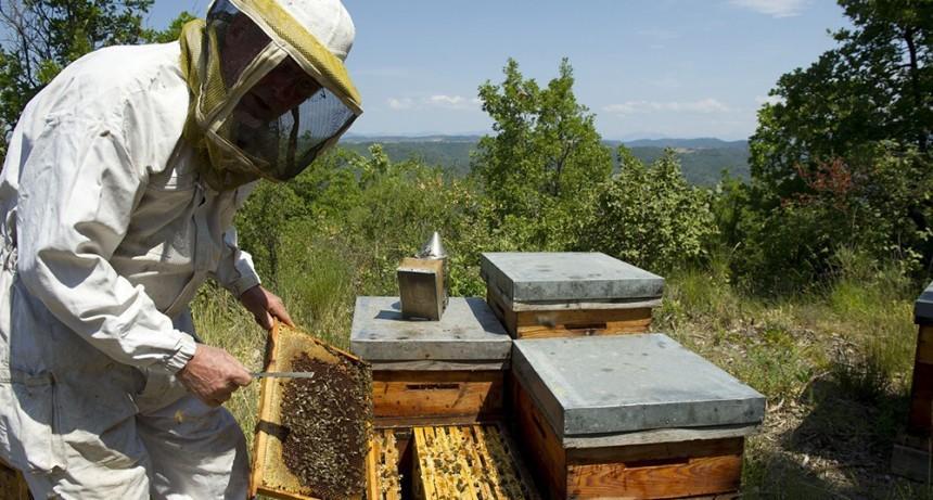 """Aníbal Duarte: """"En términos de ganancias económicas, este es el año de los apicultores"""""""