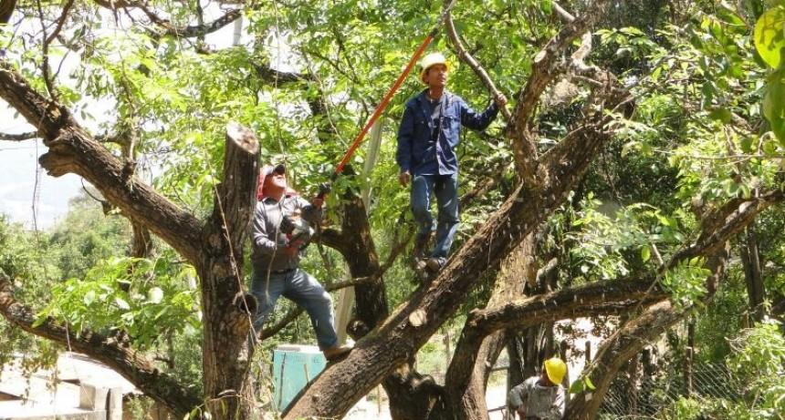 Baradero: Prohíben la poda, despunte y corte de ramas hasta el 2 de mayo