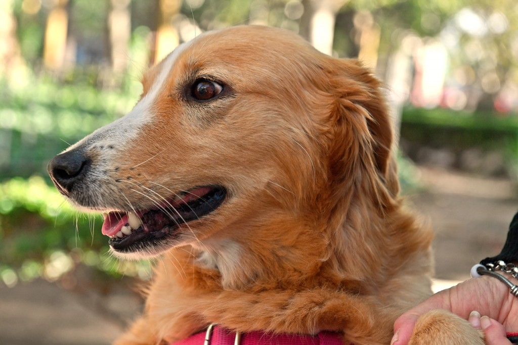 San Fernando: Zoonosis tendrá un nuevo operativo en el Delta para atender a las mascotas