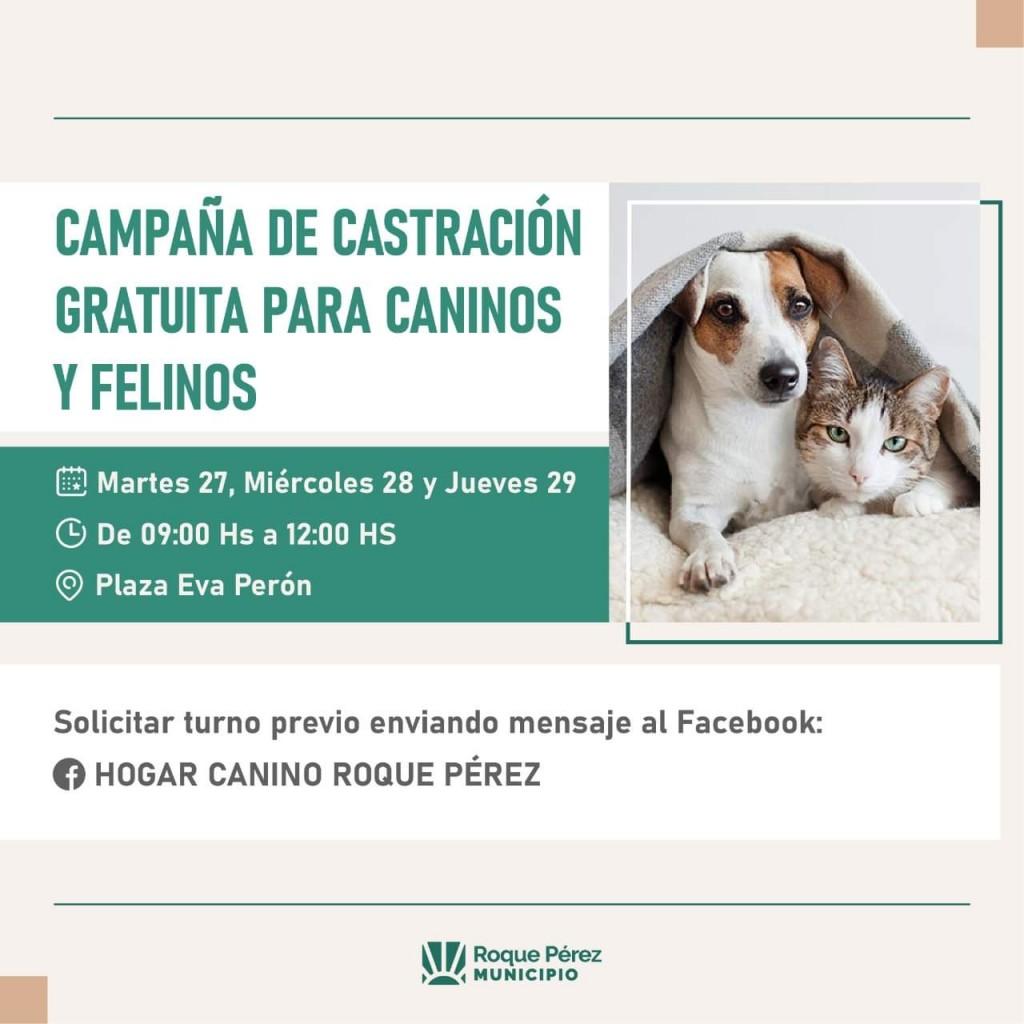 Roque Pérez: Castración gratuita en el Hogar canino Municipal