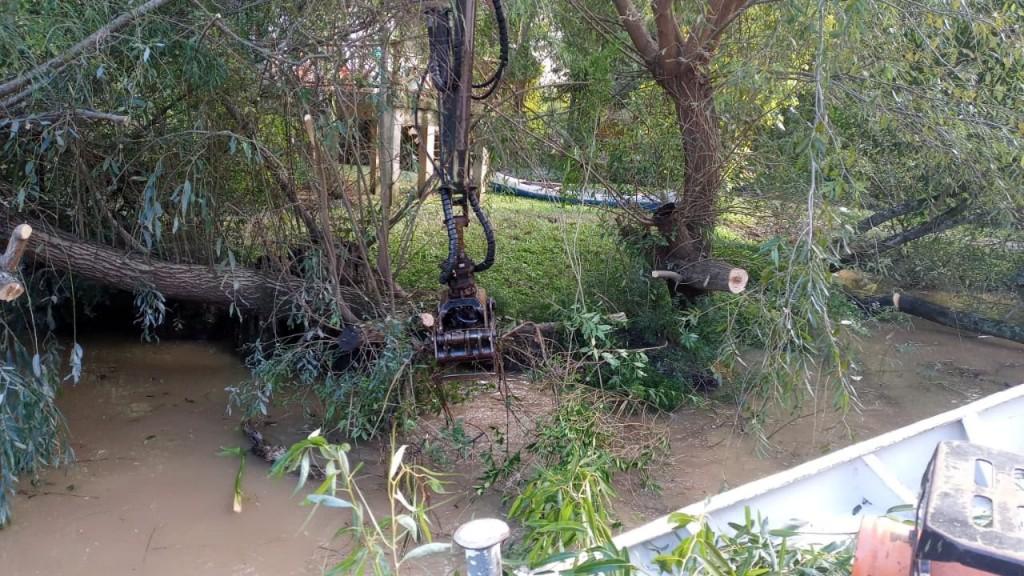 Tigre: El Municipio profundiza los trabajos de destronque y reparación de muelles, puentes y luminarias