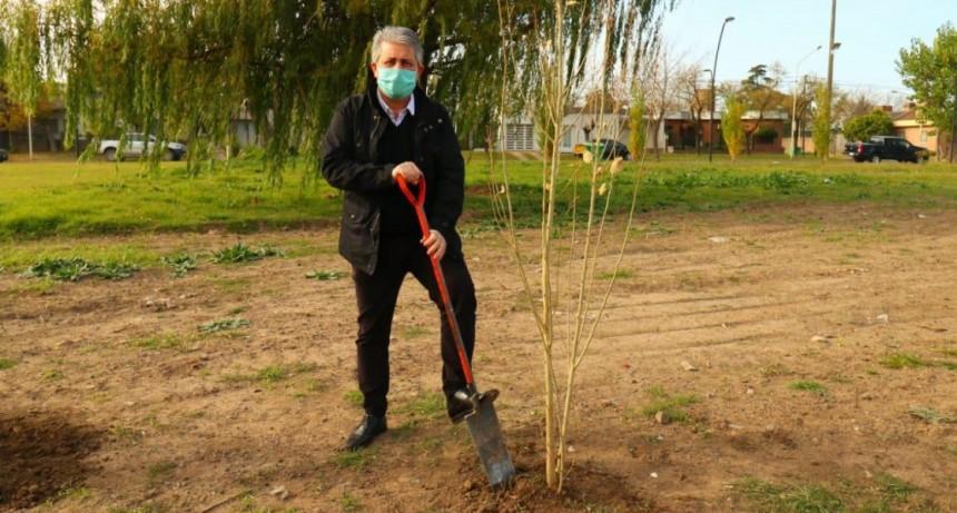 Pergamino: Se realizó la plantación del árbol fundacional del Parque Belgrano