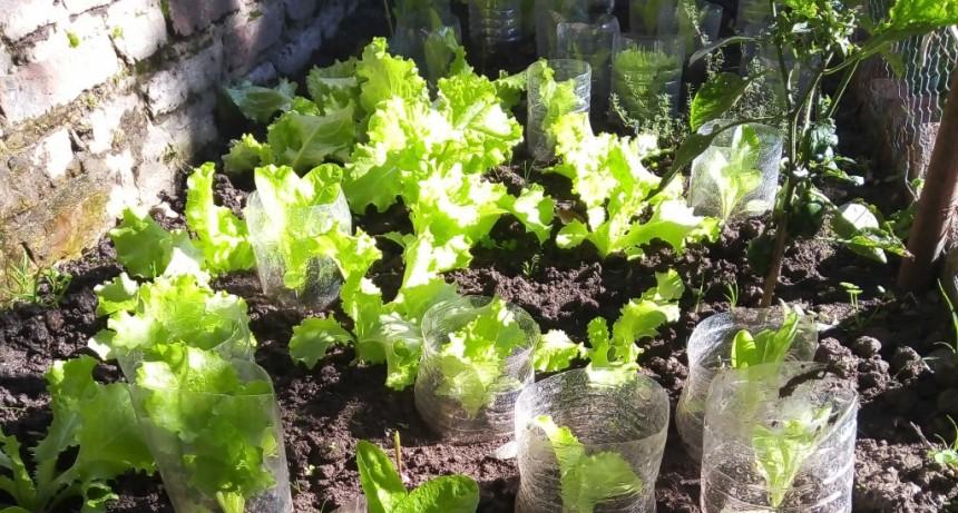 San Martín: El Municipio entregó 1.800 kits de semillas, para impulsar la producción familiar de alimentos