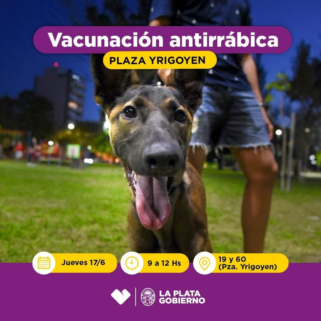 La Plata: Se llevará adelante una jornada de vacunación antirrábica gratuita en Plaza Yrigoyen