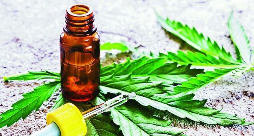 Berazategui aprobó el uso del cannabis medicinal